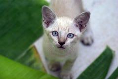 Il gattino che fissa noi L'espressione di dubbio immagini stock libere da diritti