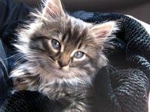 Il gattino che ha trovato la casa immagine stock