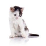 Il gattino chiazzato adorabile immagini stock