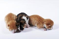 Il gattino cieco del bambino ha perso in un mucchio Fotografia Stock Libera da Diritti