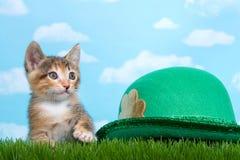 Il gattino del soriano di Tortie si è appollaiato sotto la st verde alta Pat dell'erba della molla Immagini Stock