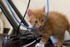 Il gattino dello zenzero mastica il cavo primo piano, luce morbida immagini stock libere da diritti