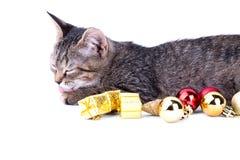 Il gattino grigio del soriano lecca la zampa che si trova accanto ai contenitori di regalo su bianco Immagine Stock