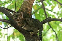 Il gattino ha scalato un albero e non può uscire di là fotografie stock libere da diritti