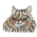 Il gattino lanuginoso animale della testa dell'animale domestico dei gatti del gatto che disegna il siberiano selvaggio ha isolat royalty illustrazione gratis