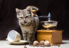 Il gattino offensivo di colore del soriano si siede accanto ad un macinacaffè manuale ed ai chicchi di caffè fotografia stock libera da diritti