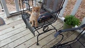 Il gattino pronto ad intraprendere il nuovo giorno fotografie stock libere da diritti