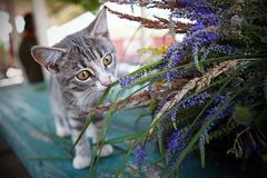 Il gattino scopre il mondo fotografia stock