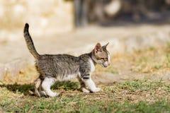 Il gattino smarrito Fotografie Stock Libere da Diritti