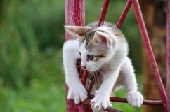 Il gattino sta scalando sulla colonna rossa. immagini stock