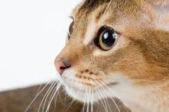 Il gattino su una priorità bassa bianca Fotografia Stock