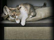 Il gattino sveglio custodice lo spazio della tela da imballaggio per il vostro testo fotografie stock libere da diritti