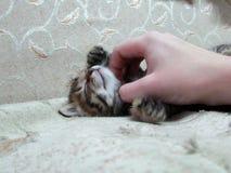 Il gattino sveglio dolce sta dormendo Fotografia Stock Libera da Diritti