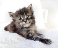 Il gattino triste dell'occhio Fotografia Stock