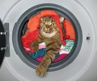 Il gatto è nella lavatrice immagini stock