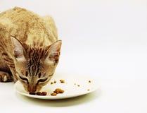 Il gatto è su fondo bianco Fotografia Stock Libera da Diritti