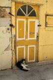 Il gatto è sulla porta: - D Immagine Stock