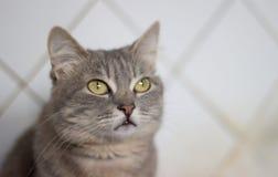 Il gatto è un cutie fotografia stock