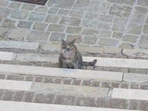 IL-gatto stockfotografie