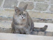IL-gatto lizenzfreies stockfoto