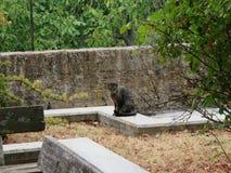 IL-gatto lizenzfreie stockfotos