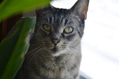 Il gatto Immagine Stock
