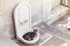 Il gatto Immagini Stock