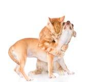 Il gatto abbraccia il cucciolo Isolato su priorità bassa bianca immagini stock libere da diritti
