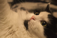 Il gatto allegro Fotografie Stock
