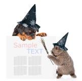 Il gatto allegro con il bastone della scopa di streghe ed il cucciolo del rottweiler con i cappelli per Halloween che dà una occh immagine stock