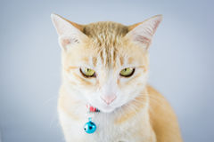 Il gatto arancio dello zenzero ha il collare e campana Immagine Stock