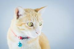 Il gatto arancio dello zenzero ha il collare e campana Immagini Stock