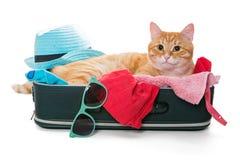Il gatto arancio mette su una valigia Immagini Stock Libere da Diritti