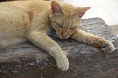 Il gatto arancio sta dormendo sull'aria aperta immagini stock libere da diritti
