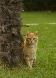 Il gatto arancio sta mettendo vicino alla palma fotografie stock