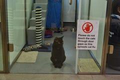 Il gatto Battersea di adozione insegue i gatti a casa fotografie stock libere da diritti