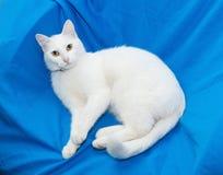 Il gatto bianco con giallo osserva la menzogne sulla sedia Fotografie Stock Libere da Diritti
