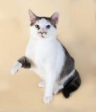 Il gatto bianco con l'adolescente dei punti si siede su giallo Immagine Stock