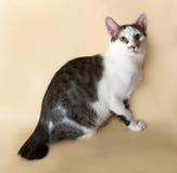 Il gatto bianco con l'adolescente dei punti si siede su giallo Fotografia Stock