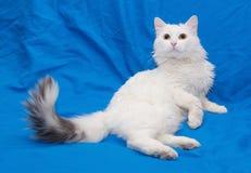 Il gatto bianco con la coda grigia ed il giallo osserva Immagini Stock Libere da Diritti