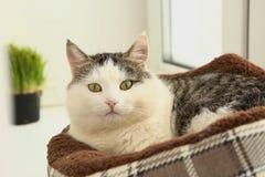 Il gatto bianco della posta di gatto del fronte pone a letto sul davanzale fotografia stock libera da diritti