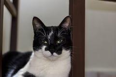 Il gatto in bianco e nero che riposa dietro la sedia fotografia stock libera da diritti