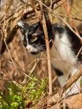 Il gatto in bianco e nero nella foresta Fotografia Stock