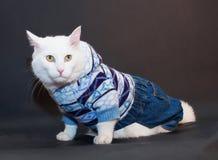 Il gatto bianco spaventato con giallo osserva in un vestito tricottato Immagine Stock