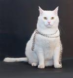 Il gatto bianco triste con giallo osserva con il aroun d'argento delle perle di Natale Fotografia Stock Libera da Diritti