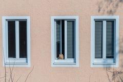 Il gatto bruno-rossastro si siede su un davanzale e guarda fuori la finestra fotografia stock libera da diritti