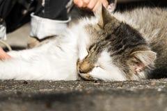 Il gatto buono pone e si riscalda al sole Fotografia Stock