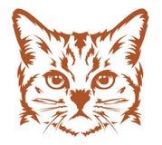 Il gatto capo si raffredda Immagini Stock Libere da Diritti