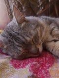 Il gatto che è si rilassa Immagini Stock Libere da Diritti
