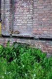 Il gatto che che dorme appena alle pareti di vecchia Camera Immagini Stock Libere da Diritti